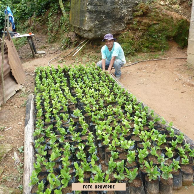 OroVerde_Aufforstung_Baumschule_Guatemala_Regenwald